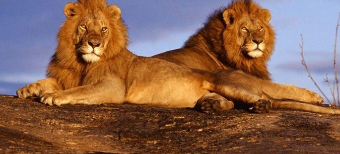 africa wild life | Maasai Mara, Watch Video of Africa's Greatest Wildlife Reserve