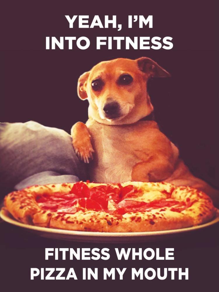 Funny dog memes funny animal memes animal memes