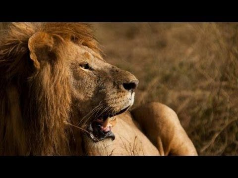 Africa - Into The Wild - VenTribe. Inspiratoinal video. Life on earth.