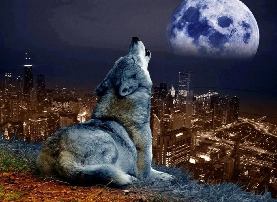 Wolves And Native American Indians Beautiful Wolves Wolf