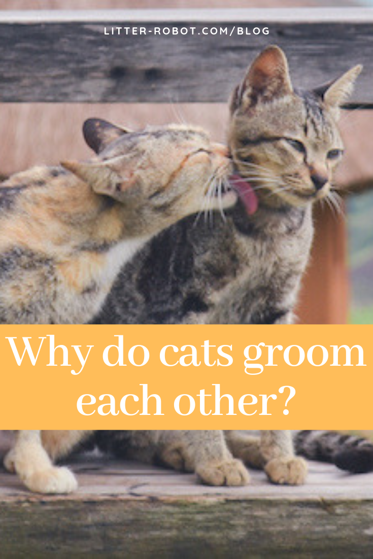 Why Do Cats Groom Each Other? Cat grooming, Cats, Happy