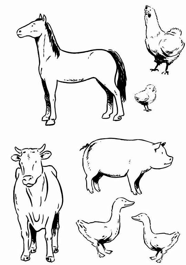Farm Animal, : Various Type of Farm Animal Coloring Page | Coloring ...