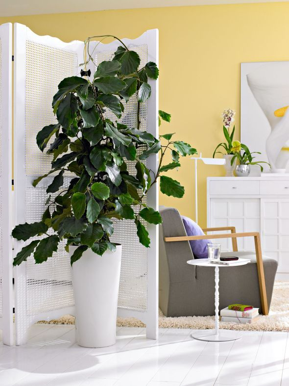 Grünpflanzen für jeden Wohnstil | WOHNEN | Wohnzimmer | Wohnzimmer ...