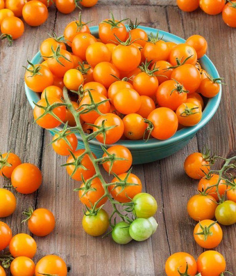 Meilleures tomates à jardin | Planter des tomates cerises ...
