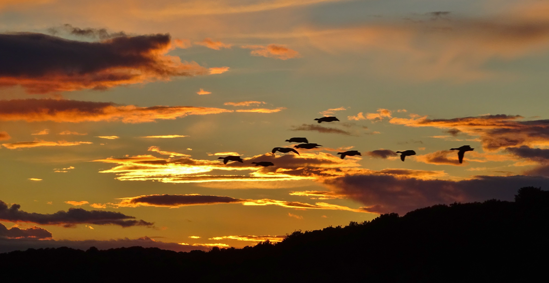 Geese flying across the horizon..