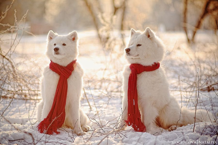 Christmas Snow Dogs Snow Dogs Baby Animals Dog Love