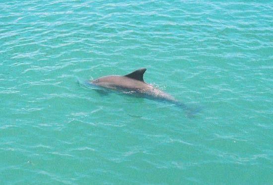 Have you ever visited Manasota Key, Florida ? | Florida ...