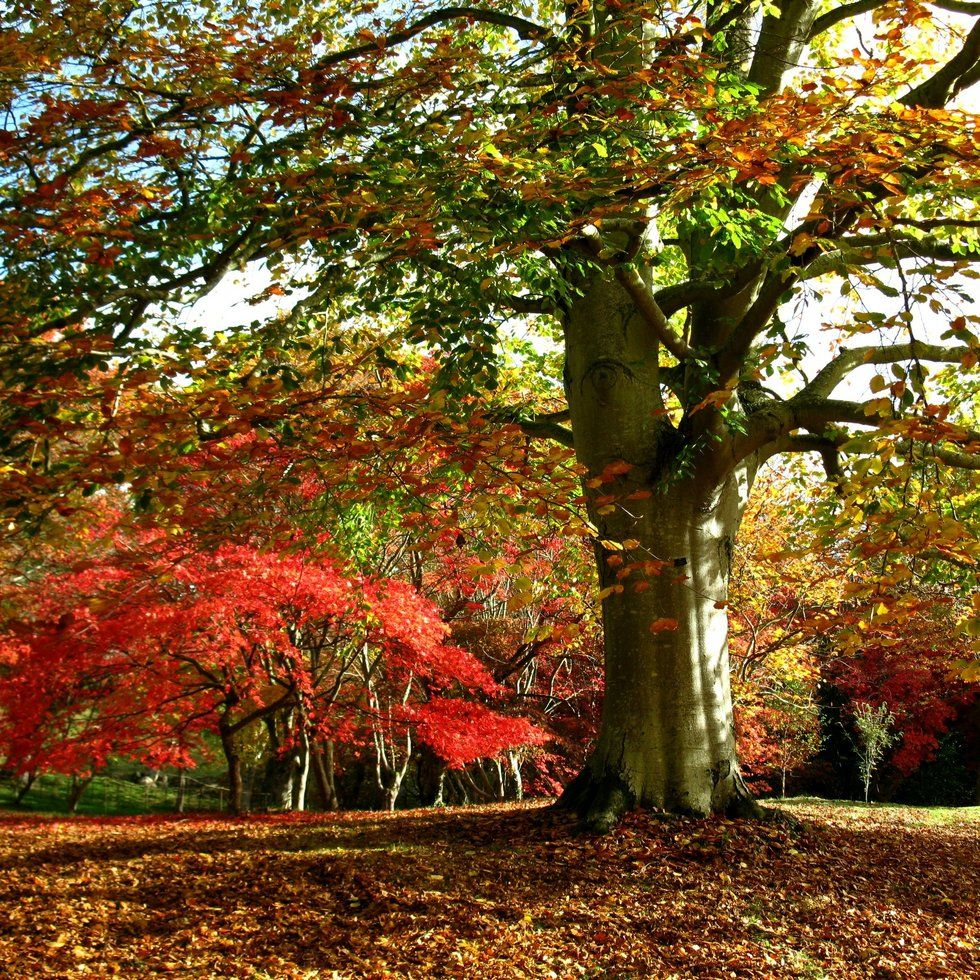 10 of the most beautiful places in the UK to see autumn in all its ...