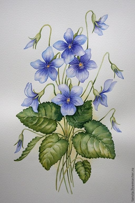 Fialka Akvarel Flower Art Flower Painting Flower Drawing