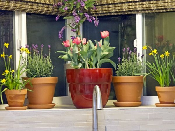 Küchenfenster Deko ~ Fenster deko fensterbank deko dekoration fensterbank dekoideen