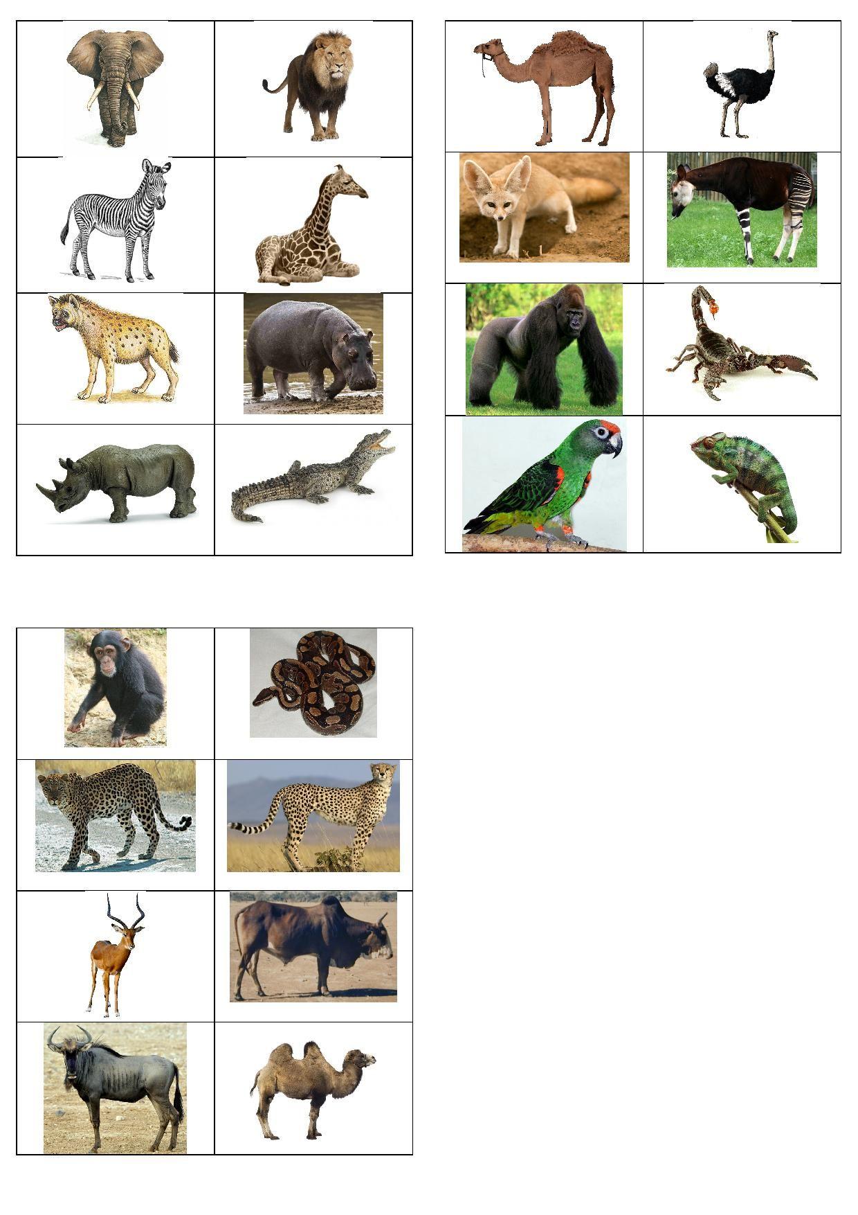 Imagiers Imagier Animaux Animaux Afrique Images Animaux Sauvages