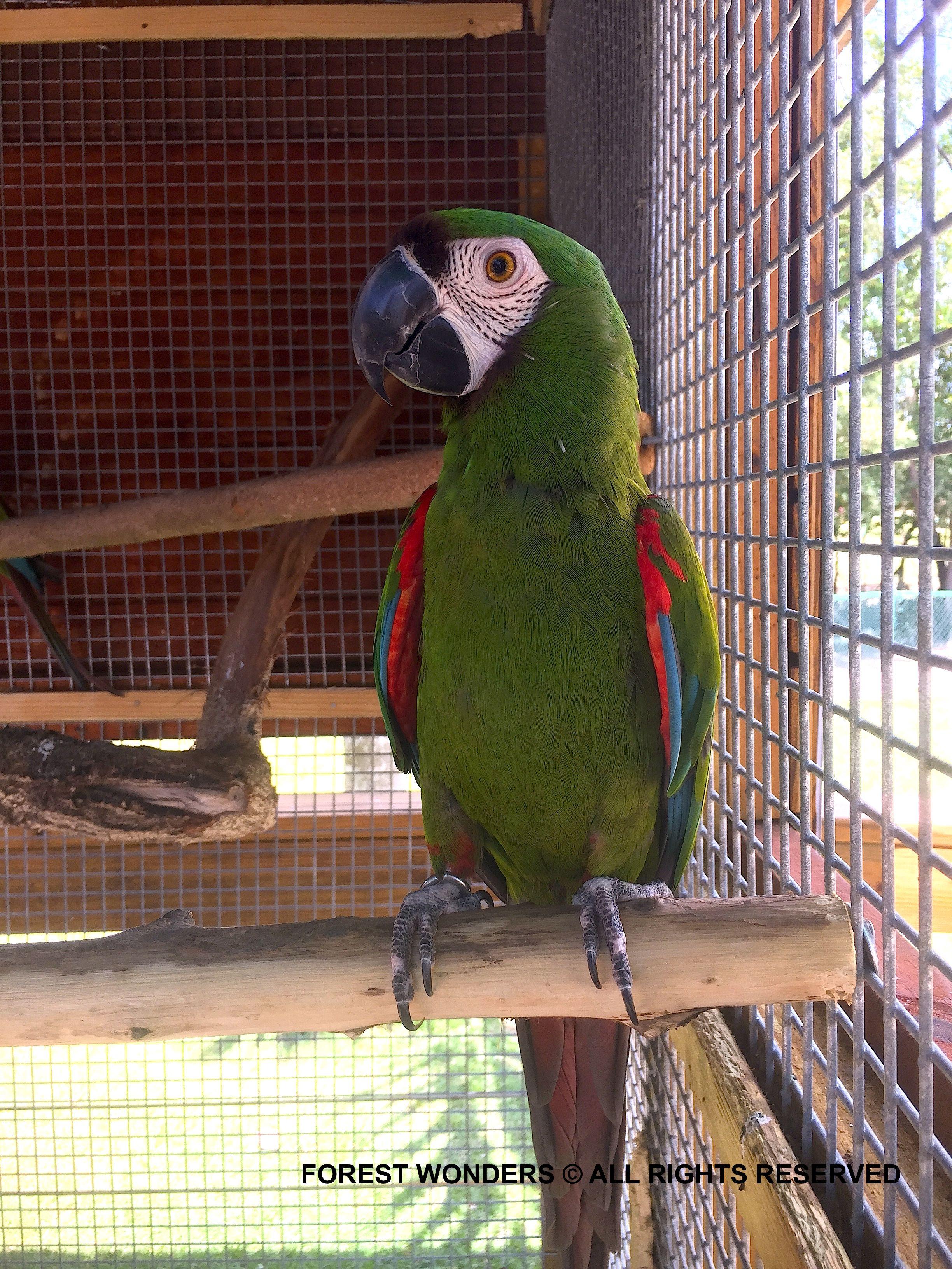 Pin On Macaws