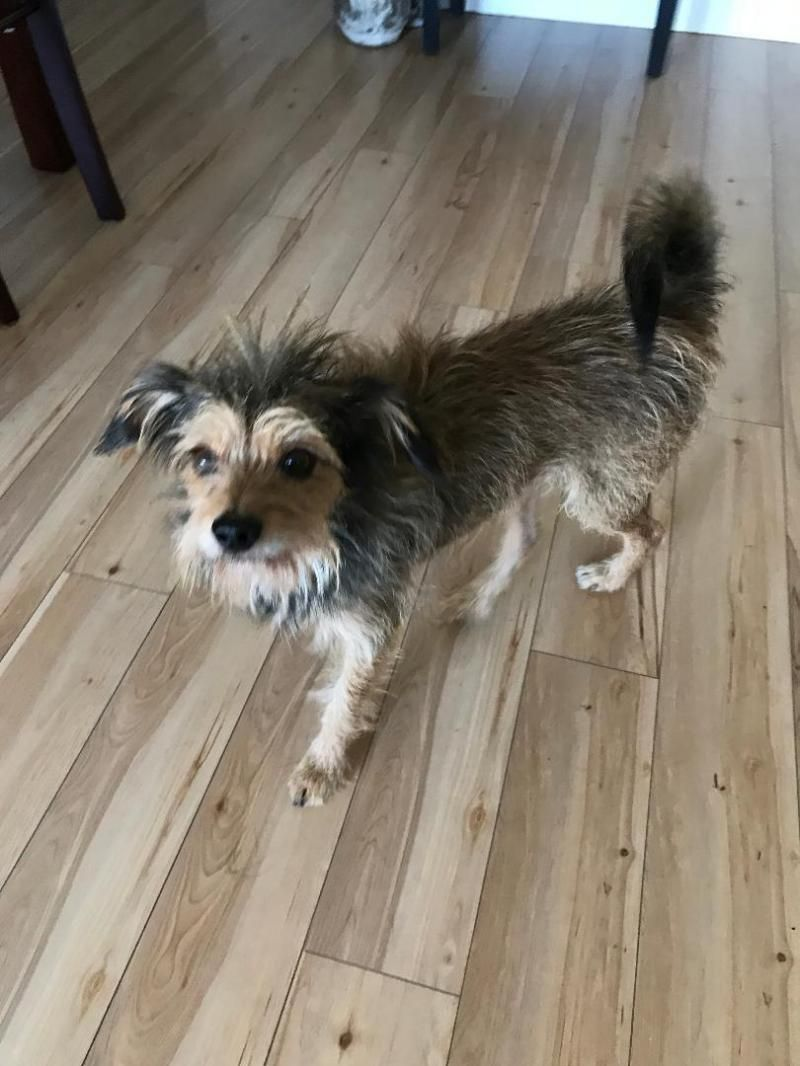 Adopt Brisco On Terrier Rescue Dogs Dogs