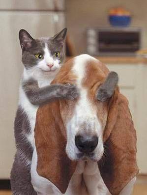 Images animaux rigolos recherche google humour pinterest chien chat chien et chat - Image animaux gratuite ...