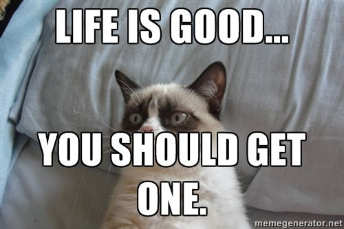 Life Is Good You Should Get One Grumpy Cat Best Funny Photos Funny Pictures Grumpy Cat