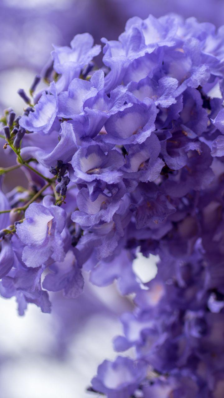 Blossom purple white flowers spring 720x1280 wallpaper flowers blossom purple white flowers spring 720x1280 wallpaper mightylinksfo