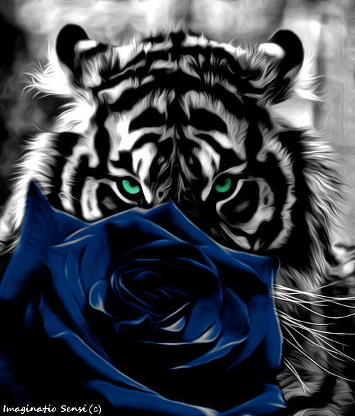 Tiger Ww Rt Rose Blue By Ponthieu14 On Deviantart Tiger Pictures Universe Art Beautiful Gif