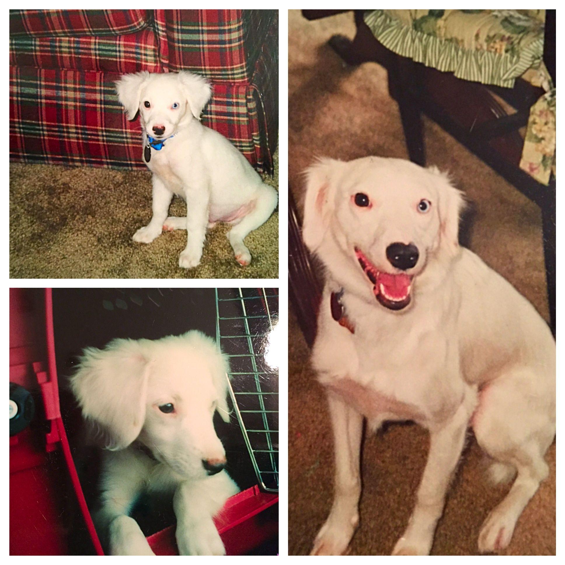 #poundpuppylove 15 years together, still my puppy