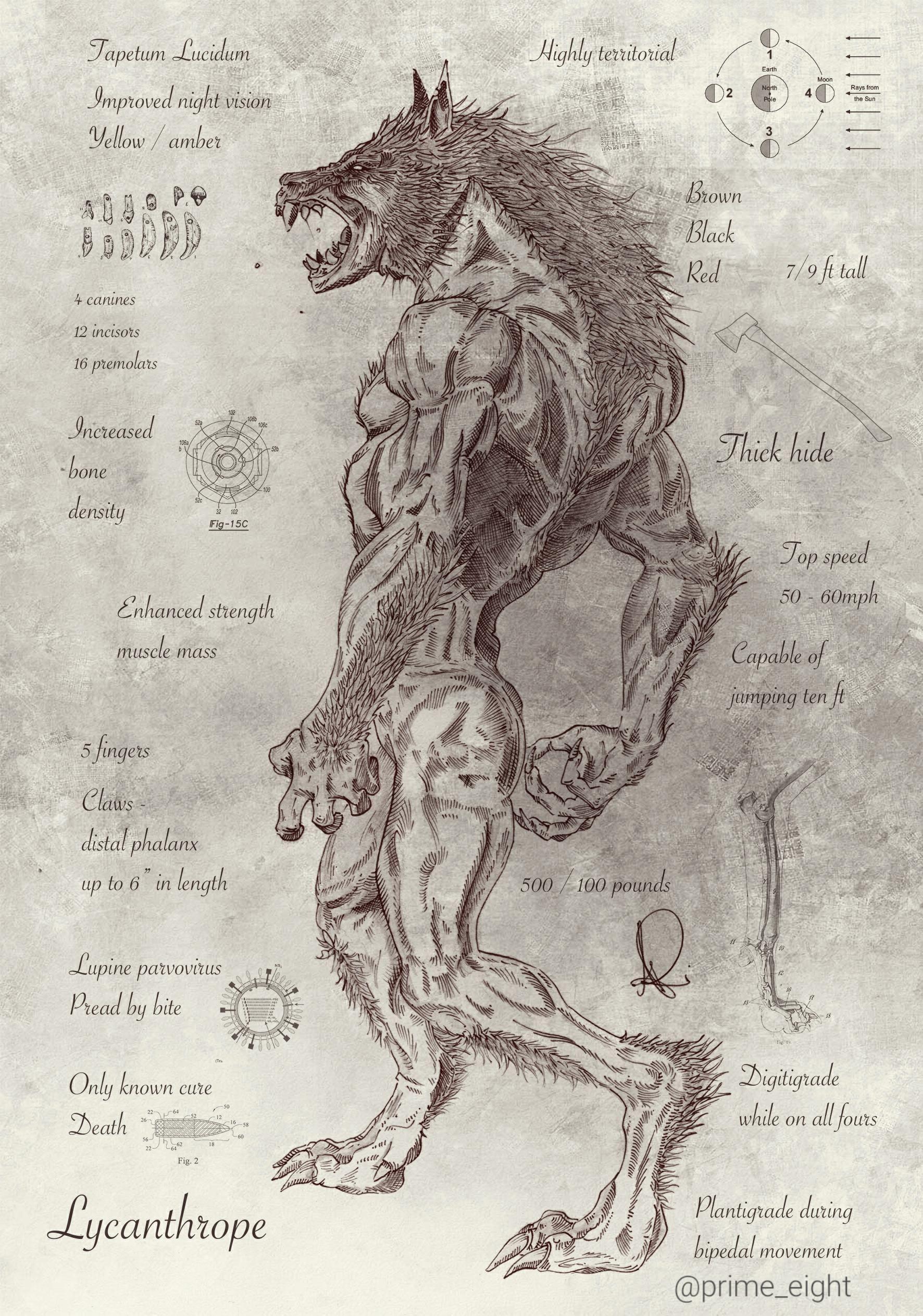 Lycanthrope illustration/digital http://ift.tt/2anUnuP