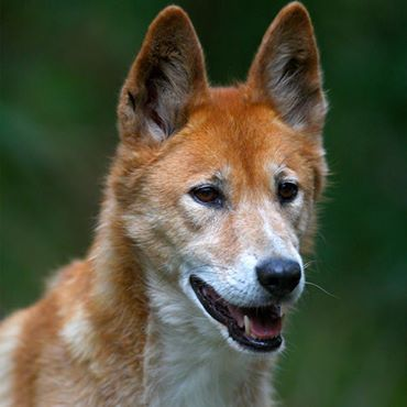 It S International Day Of Happiness To Celebrate We Would Love You To Share Your Australian Wildlife Happin Australia Animals Ancient Dogs Australian Animals