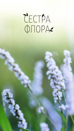 Фотографии СЕСТРА ФЛОРА | натуральная косметика в СПб – 10 альбомов