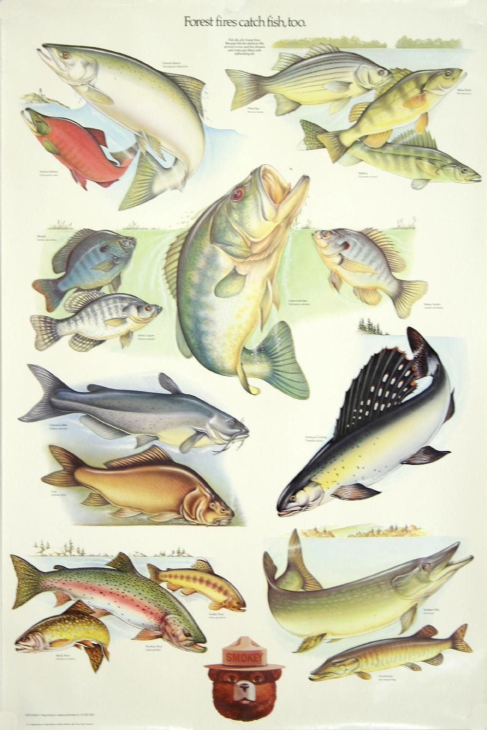 Just A Woodlands Wanderer Fish Fish Chart Trout Fishing