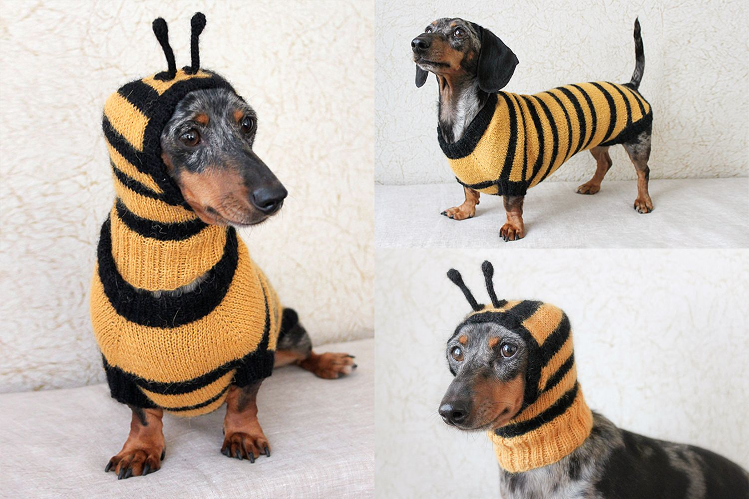 Cute Little Bee Costume For A Mini Dachshund Beecostume