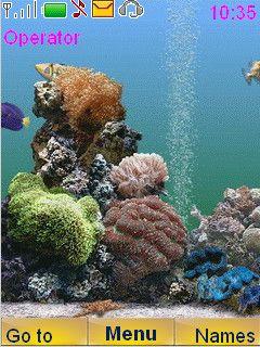Camtasia V 2 0 0 Kracked Aquarium Live Wallpaper Fish Swimming Photos Of Fish