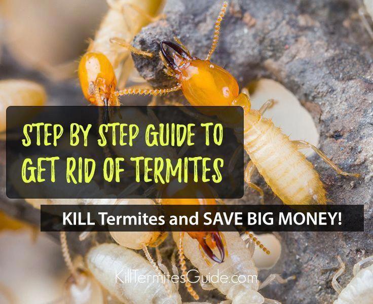 How to Get Rid of Termites domyownpestcontrol