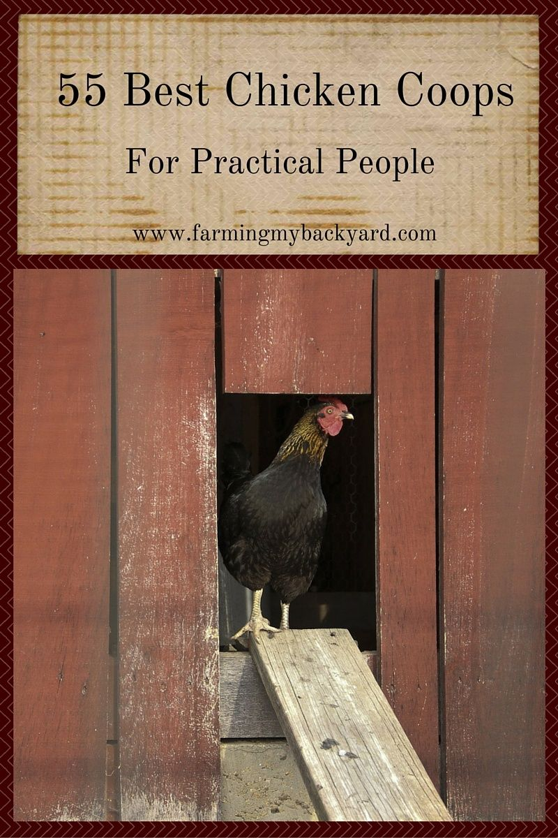 55 best chicken coops for practical people coops backyard and