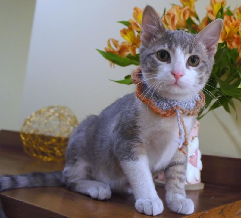 Hunter is a handsome gray and white kitten. He has two siblings. Hudson and Honey. Hunter has figured out how to get on the stair railing from the cat tree. He uses the railing like a balance beam and walks on the railing..  Hunter is playful with...