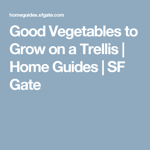 Good Vegetables to Grow on a Trellis | Home Guides | SF Gate