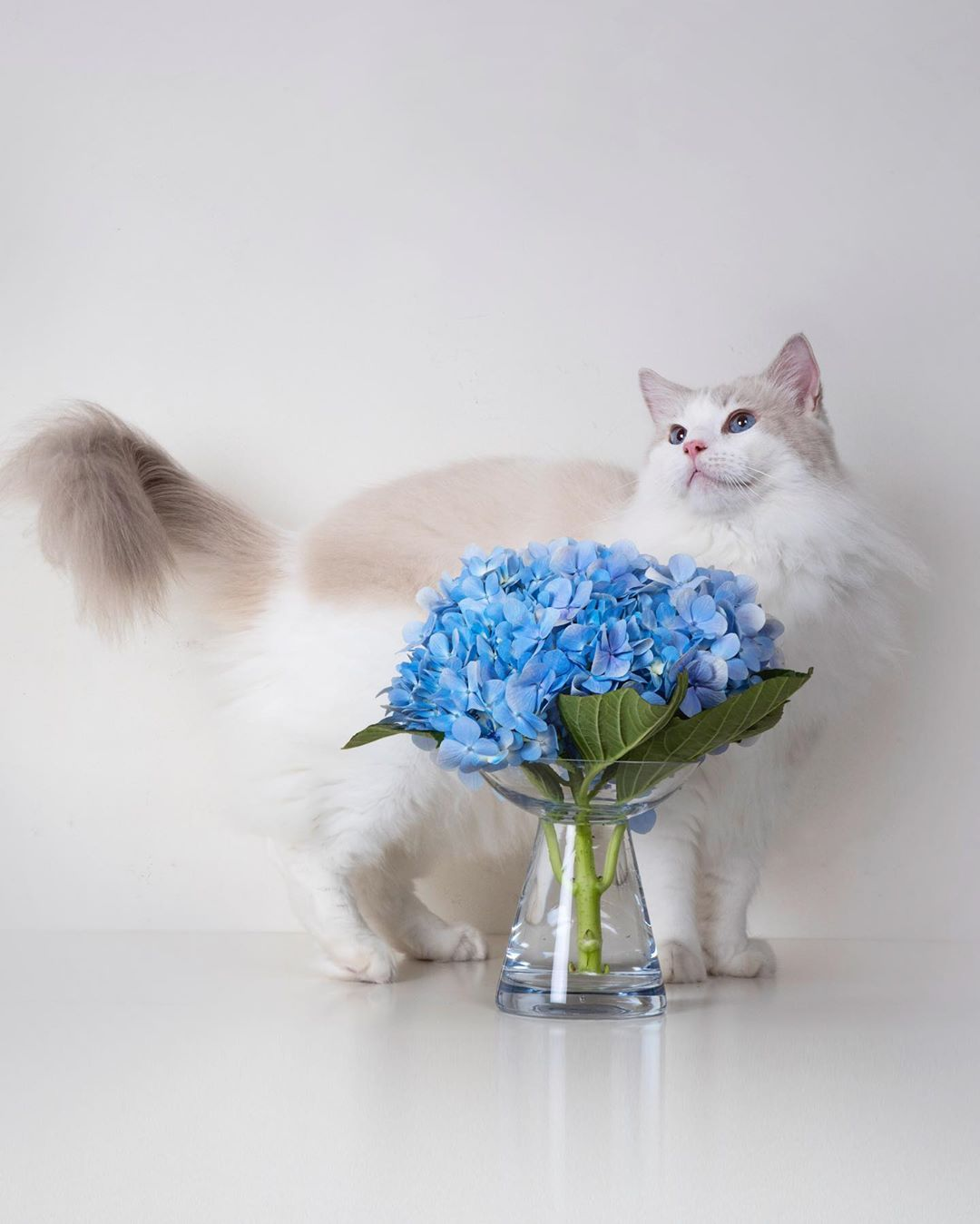 Be Like A Flower Just Bloom Dontcompete Happycaturday Hydrangeas We Just Learnt Th Resim