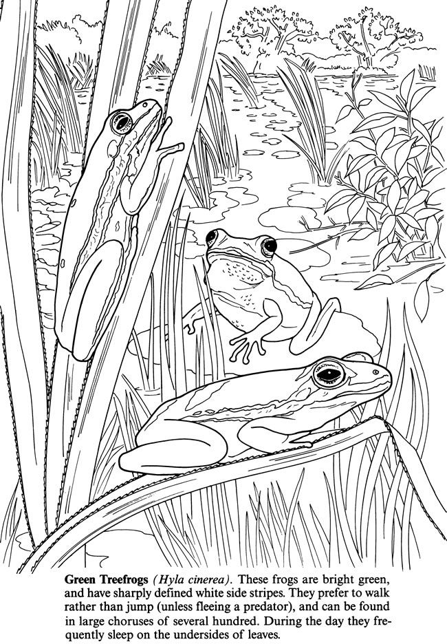 To Dover Publications Swampland Plants And Animals Coloring Book