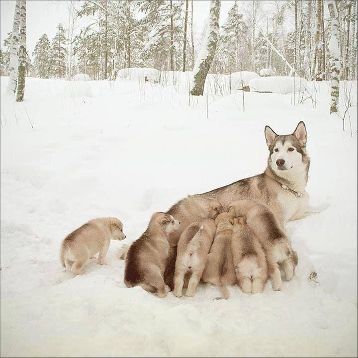 com seus filhotes no inverno