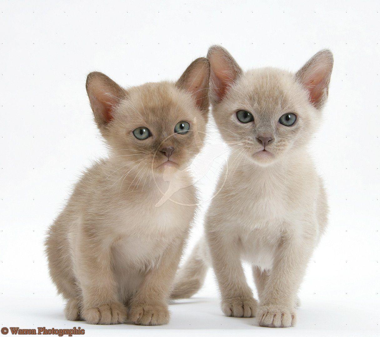 Pin Van Loesvanbeugen Op Katten Kittens In 2020 Poesje