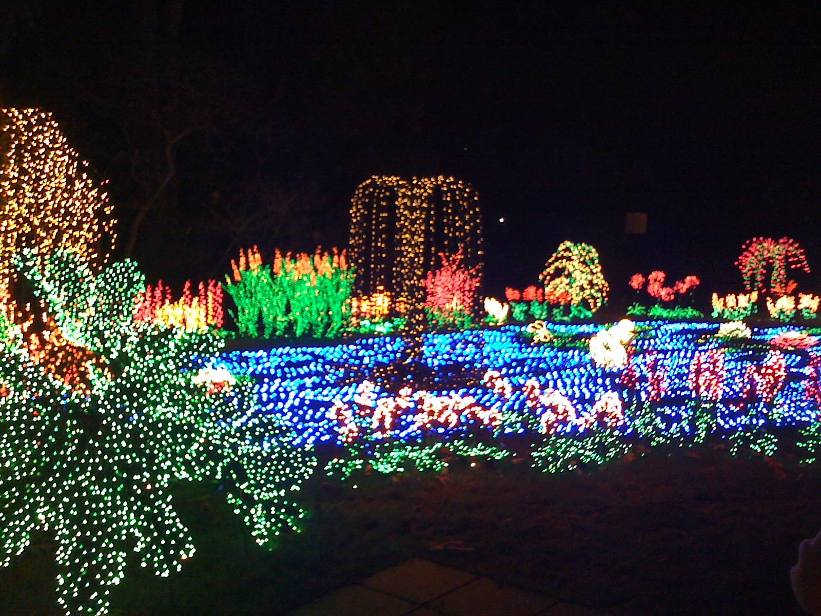 Holiday Lights are a great site at the Bellevue Botanical Gardens