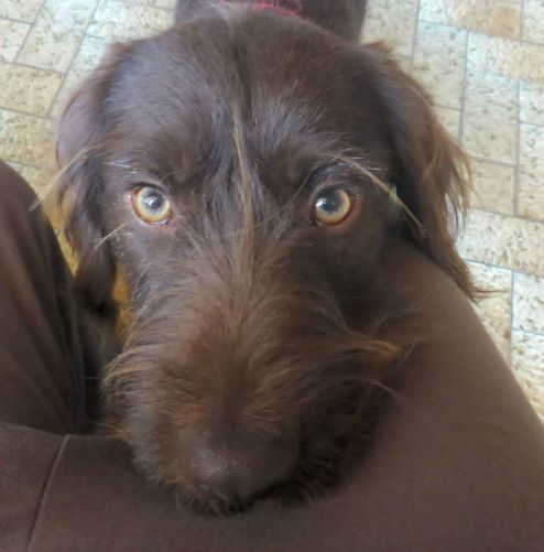 Epingle Sur To Be Adopted Cuddled And News When I Find Some