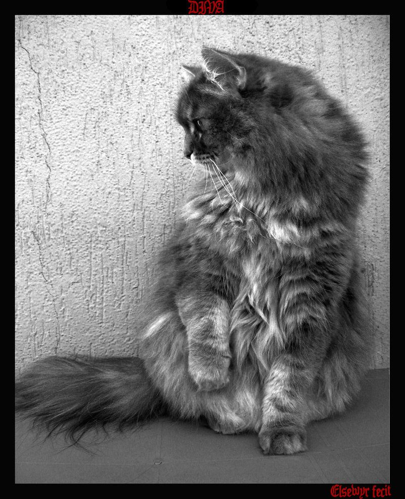 a real diva... #animal #cat