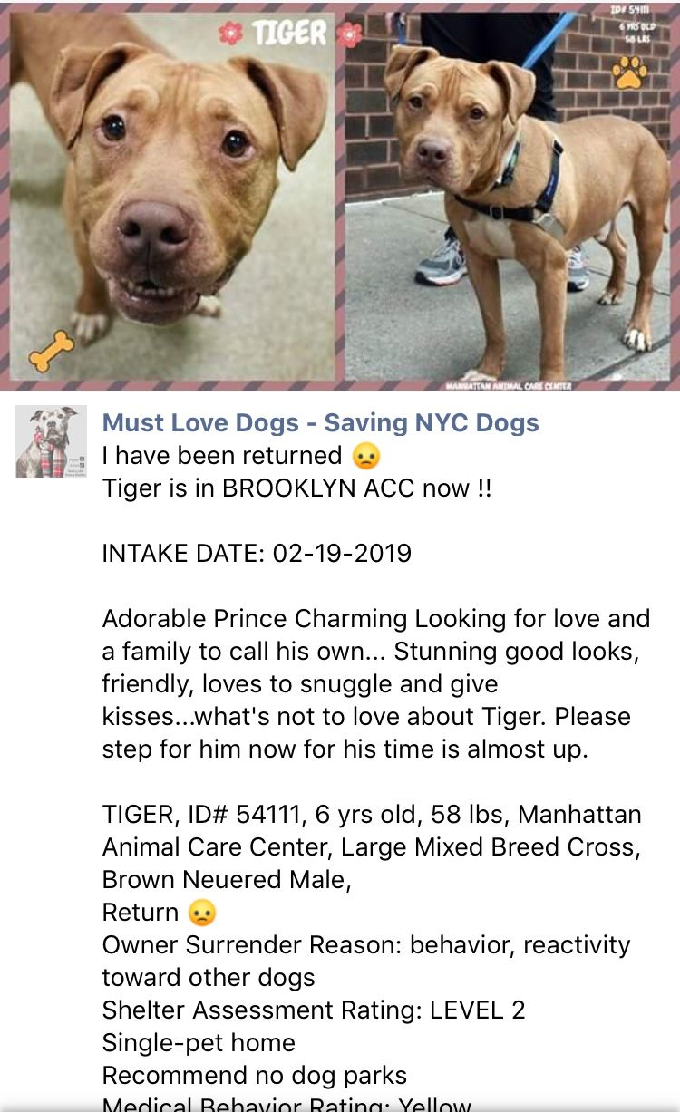 2 26 19 New York Ny Urgent Tiger Has Been Returned To The High Kill Center Nyc Acc 51111 Ij2 Nyc Dogs Dogs Funny Animals