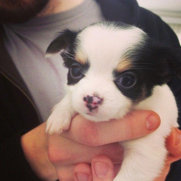 New Puppy Has Blonde Eyebrows Petinsurancecompanies Pet Health