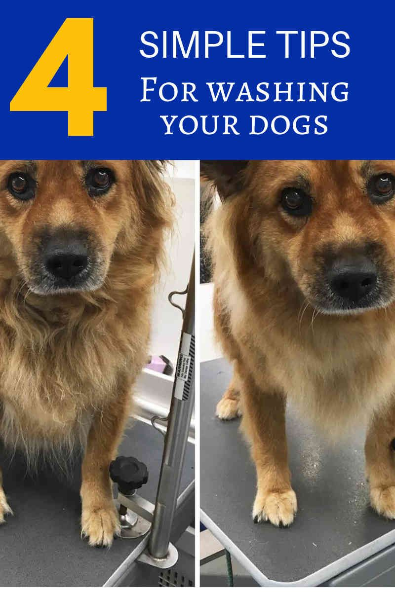 Dog Grooming Courses How To Groom Your Dog At Home Click Image For More Details Dogs Dog Grooming Tips Dog Grooming Dog Grooming Scissors