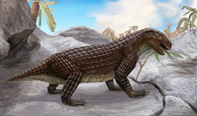 Prehistoric Crocodile Pictures: Simosuchus didn't look much like a crocodile, with its short, blunt head and vegetarian diet, but anatomical evidence points to its having been a distant crocodile ancestor, before this breed moved into the water and adopted a carnivorous diet.