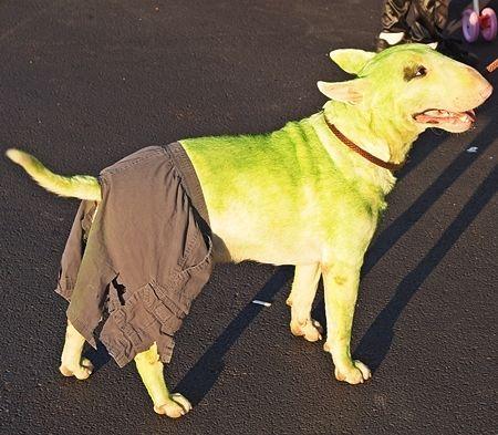 Incredible Hulk Dog Costume Dog Costumes Pet Costumes Animal