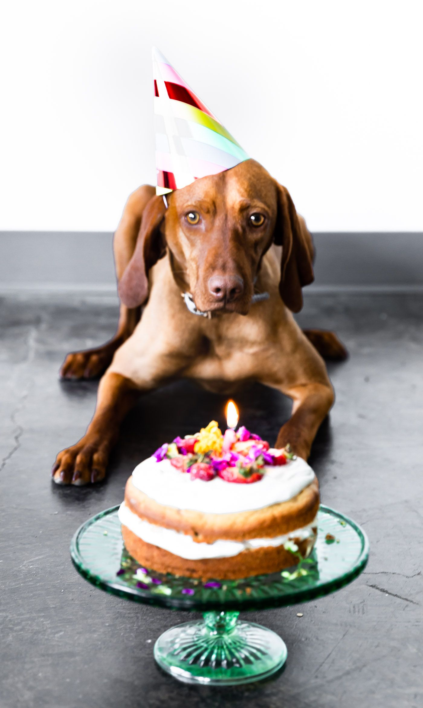Enjoyable Grain Free Birthday Cake For Dogs Recipe With Images Dog Birthday Cards Printable Giouspongecafe Filternl