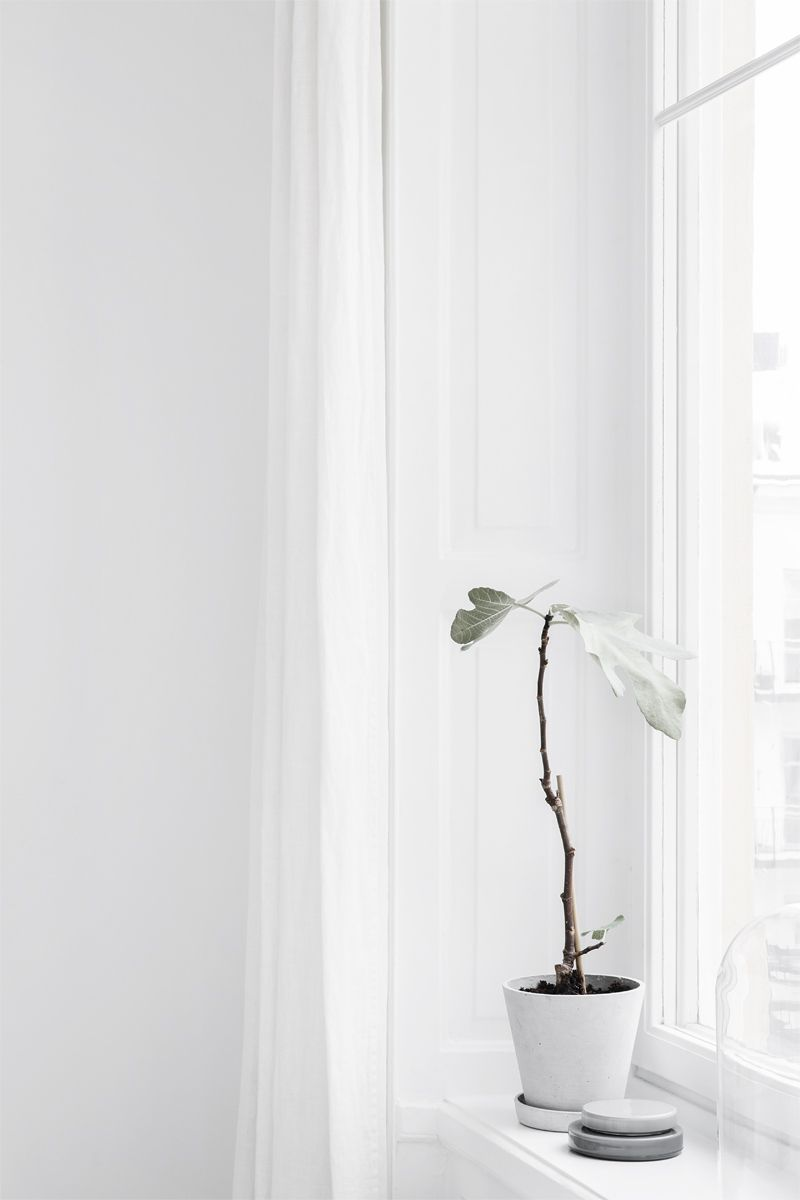 Pin by rita gaiti on flowers plants pinterest interior