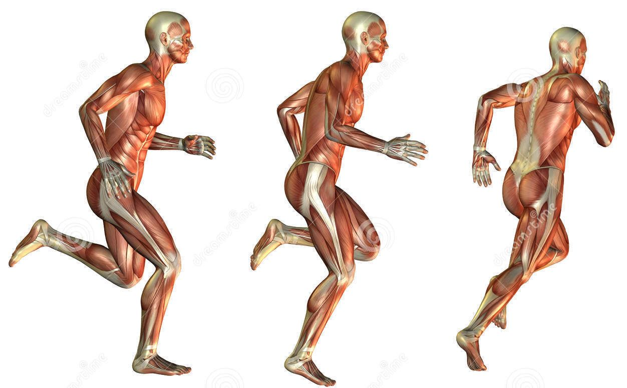 Better Definition and Nerve Activity! When fascia is tight, it ...