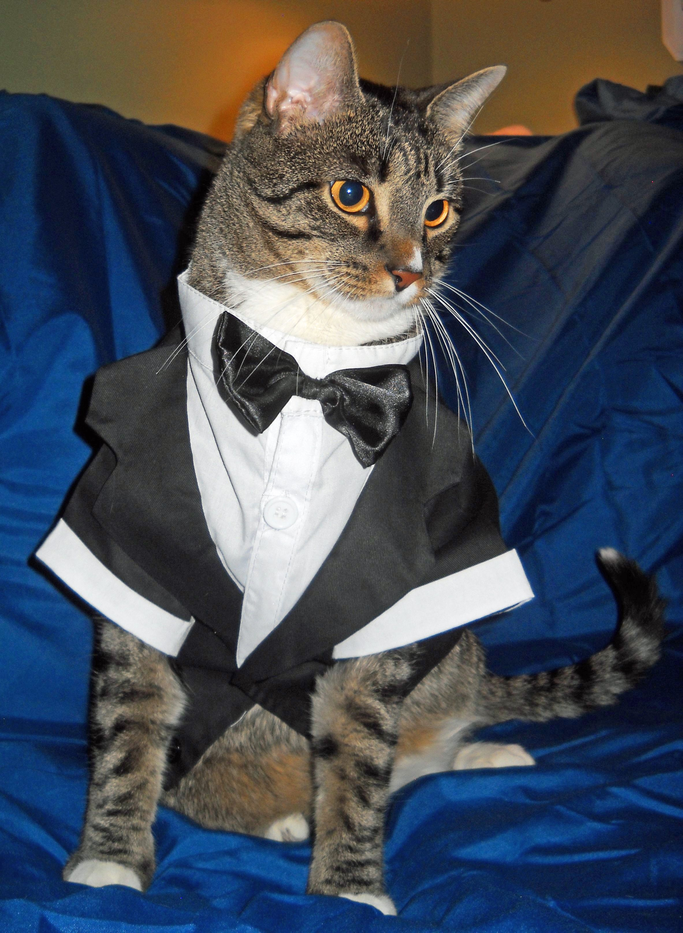 """""""Don't I clean up nice?"""" Tigger (Courtesy of Neighbor"""