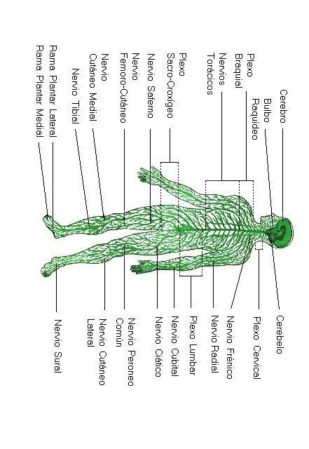 Actividades para niños preescolar, primaria e inicial. Fichas didacticas del cuerpo humano para imprimir indicadas para niños de preescolar y primaria. El Cuerpo Humano. 27