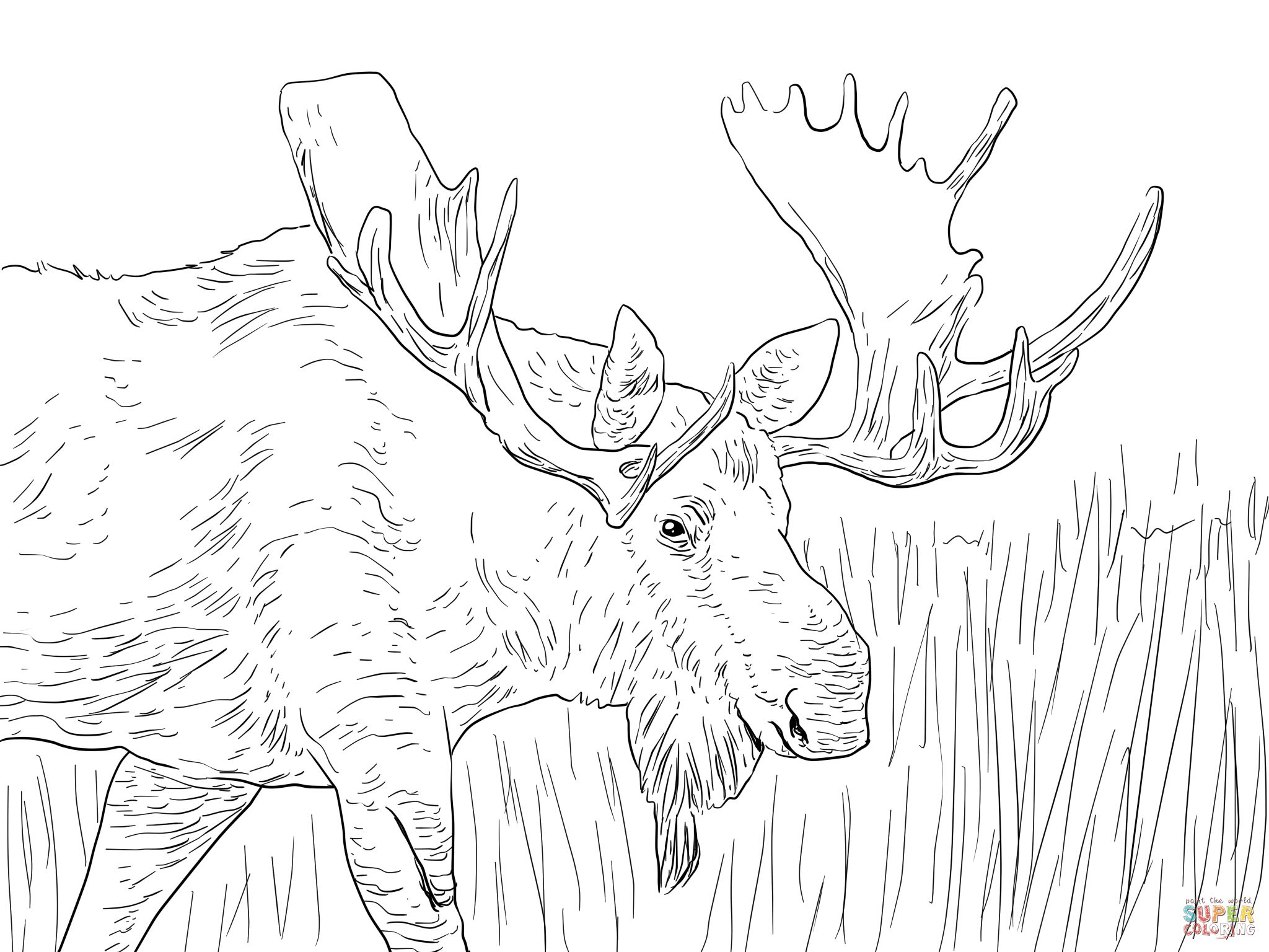 Cool Moose Coloring Pages Fantastic Free